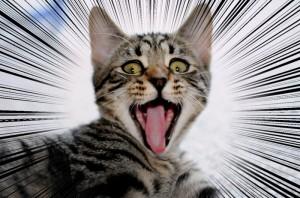 ショック猫