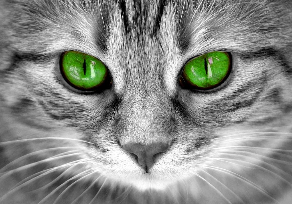 cat-2806300_1920