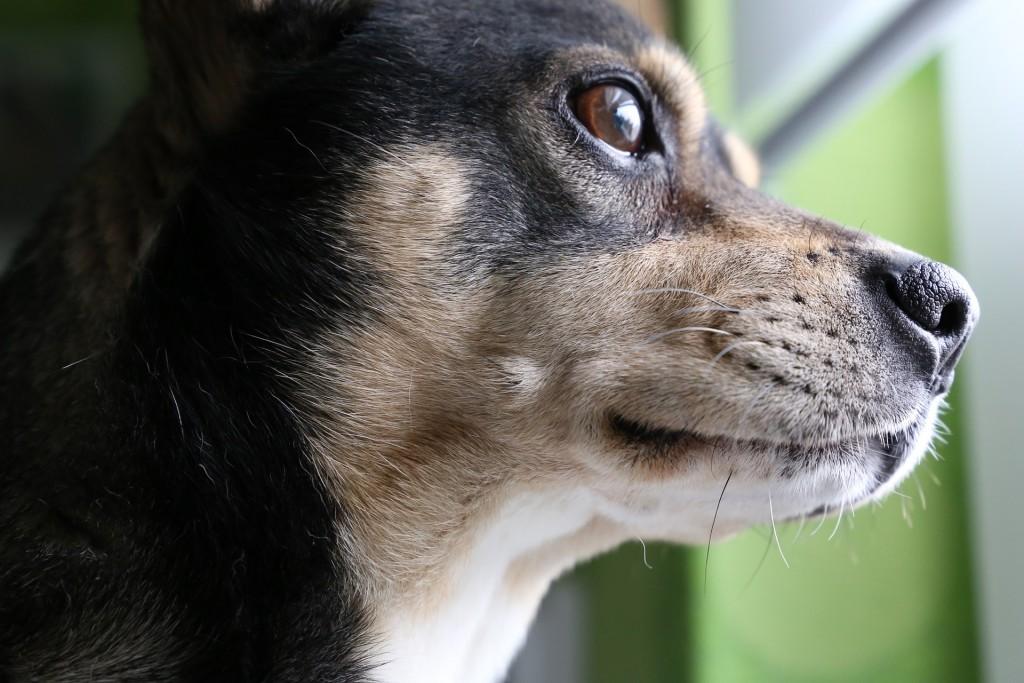dog-2642178_1920